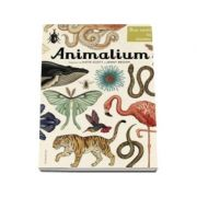 Animalium. Bun venit la muzeu. Intrarea libera - Katie Scott, Jenny Broom