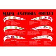 Mapa Anatomia Omului - 6 Planse A3 Pliate Plastifiate