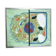 Celula - basorelief imagine librariadelfin.ro