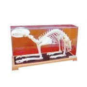 Mulaj schelet de pisica imagine librariadelfin.ro