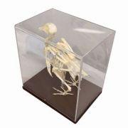 Mulaj schelet de porumbel imagine librariadelfin.ro