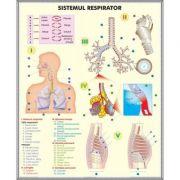 Plansa dubla - Sistemul respirator / Celula eucariota imagine librariadelfin.ro