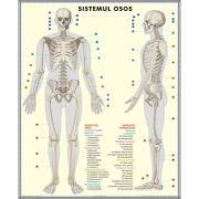 Plansa dubla - Schelet/ Sistemul muscular imagine librariadelfin.ro