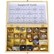 Set - 24 de fosile imagine librariadelfin.ro