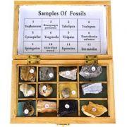 Set - diversitatea fosilelor imagine librariadelfin.ro