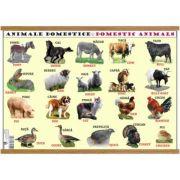 Plansa animale domestice / animale salbatice, plastifiata cu agatatoare imagine librariadelfin.ro